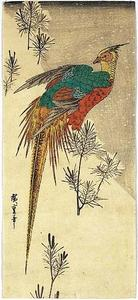 Ando Hiroshige - Pheasant among Young Pine on a Hill in Snow