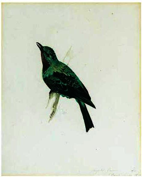 Order Art Reproductions Pop Art | A Purple-Throated Chatterer by Edward Lear | BuyPopArt.com