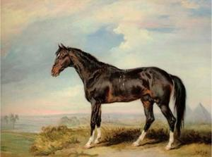James Ward - A Dongola stallion from Nubia