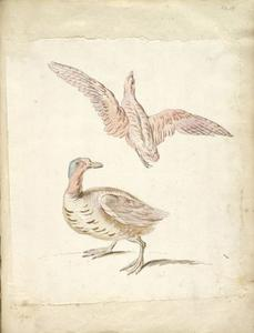 Jean-Baptiste Oudry - Standing Duck and Bird in Flight