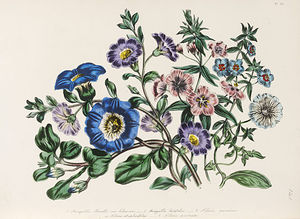 Jane Loudon - The Ladies' Flower-garden Of Ornamental Annuals -