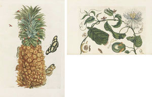 Maria Sibylla Merian - Histoire Des Insectes De L'europe. Translated From Dutch Into French By Jean Marret. Amsterdam Jean Frederic Bernard