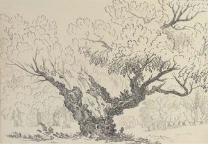 John Claude Nattes - Study Of An Oak Tree, Hyde Park