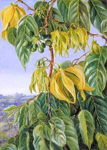 Marianne North - Flowers and Fruit of the Cananga, SingaporeFlowers and Fruit of the Cananga, Singapore