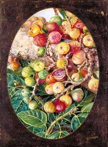 Marianne North - Foliage and Fruit of Fig Tree held Sacred by the Hindoos