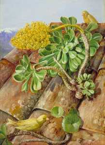 Marianne North - Houseleek and Canary Birds in Teneriffe