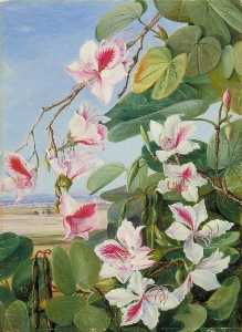 Marianne North - Foliage, Flowers and Fruit of a Common Indian Forest Tree