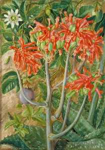 Marianne North - Aloe and Passionflower, South Africa