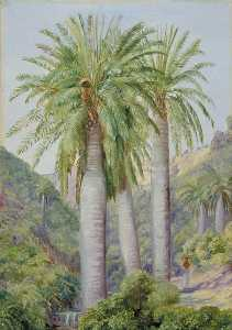 Marianne North - Chilian Palms in the Valley of Salto