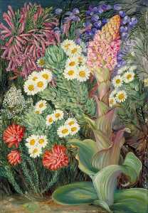 Marianne North - A Selection of Flowers from Table Mountain, Cape of Good Hope